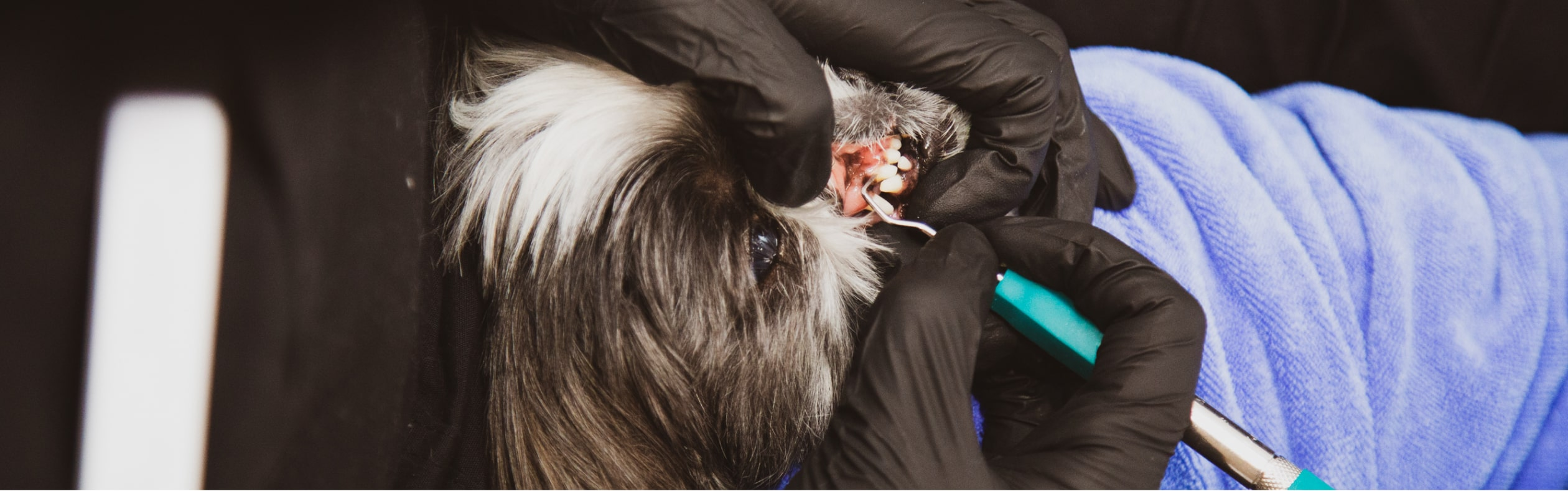 A Pet's Medical History is Key to Successful Dental Cleanings